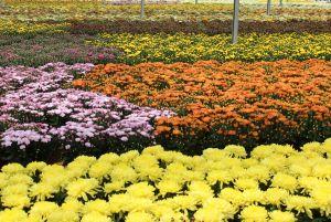 Produtores abrem estufas de flores e plantas para turistas no próximo fim de semana